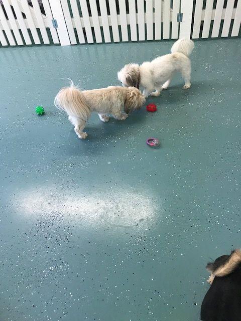 Professional Dog Kennels