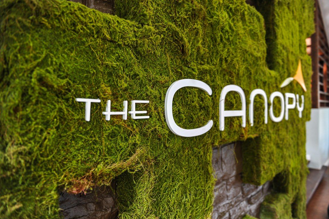 Canopy-105 background.jpg
