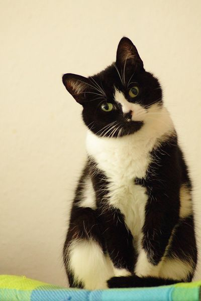 vet for elderly cat