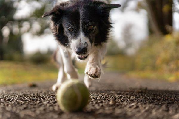 Canine Rehab