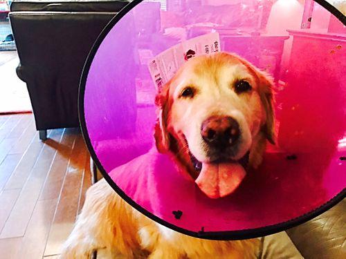 Skin Allergies in Pets