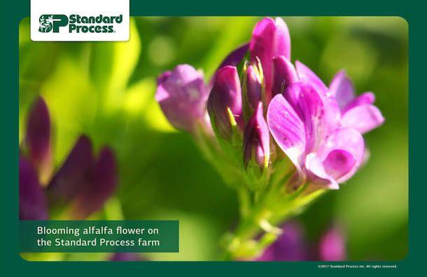 Standard Process farm-photo-1140px-14.jpg