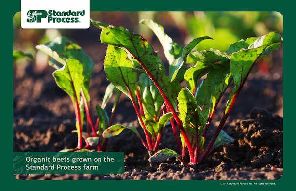 Standard Process farm-photo-1140px-19.jpg