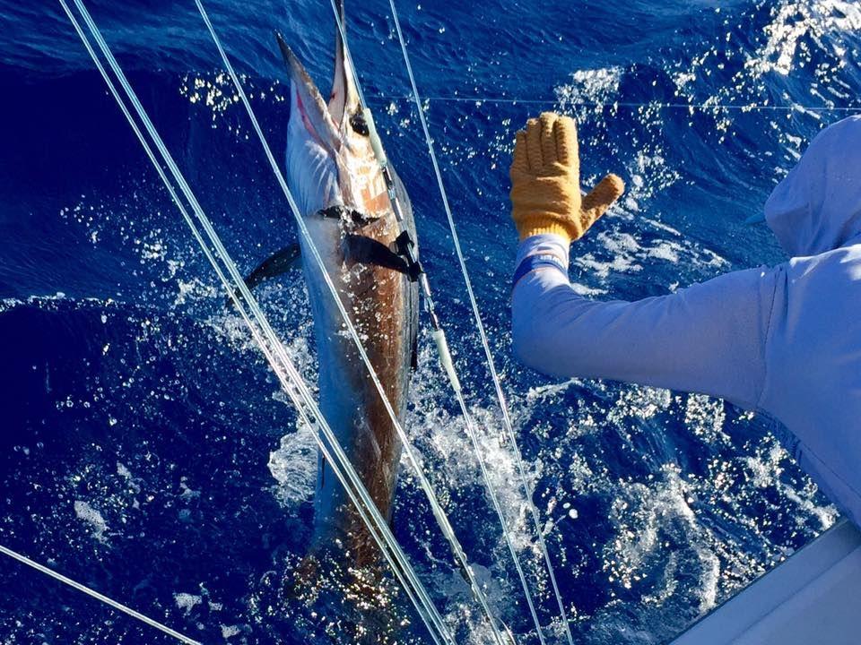 Texas Deep Sea Fishing Charters