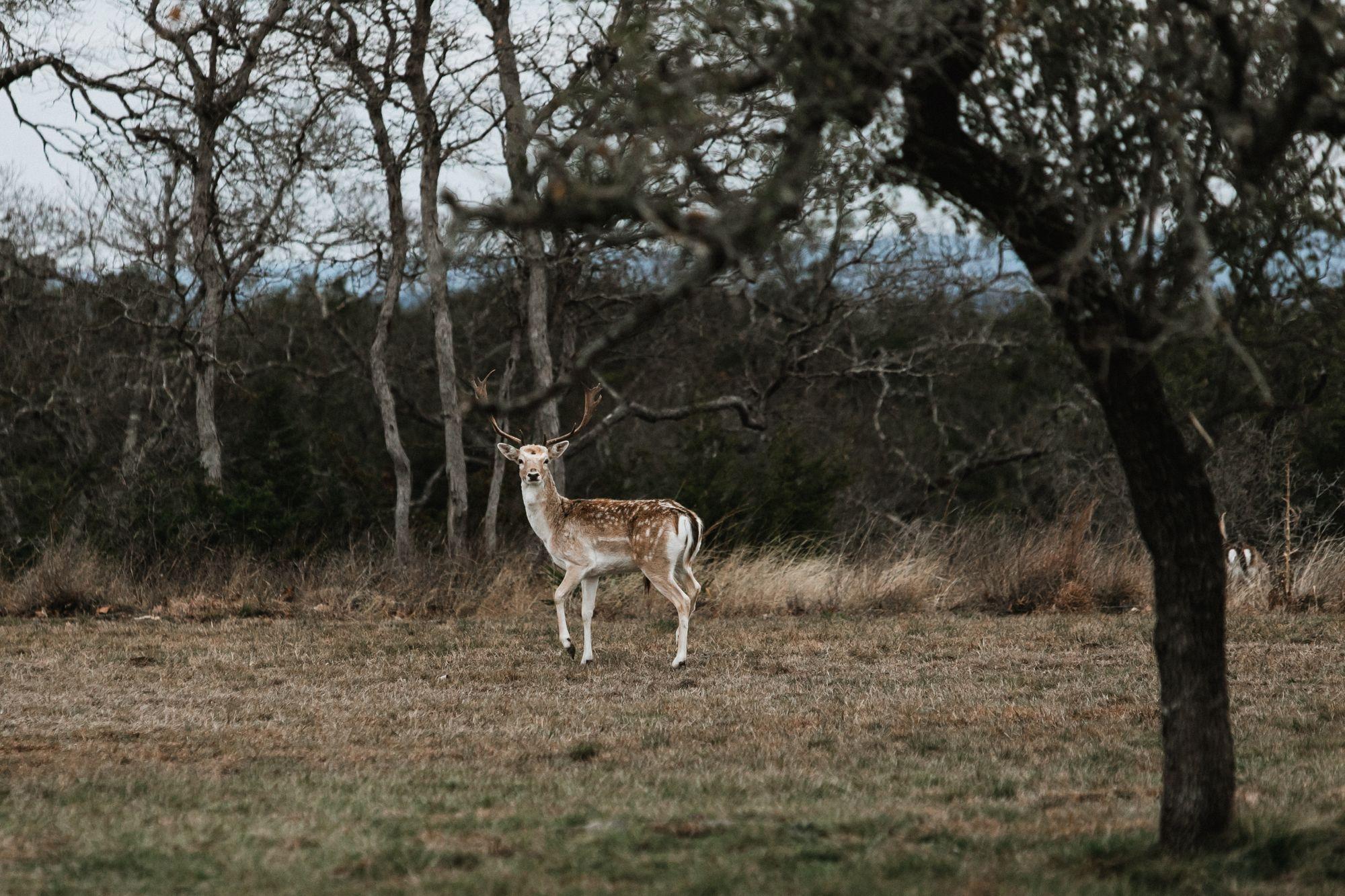 Texas Deer Hunting Ranch
