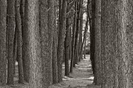Forest_Trees.jpg