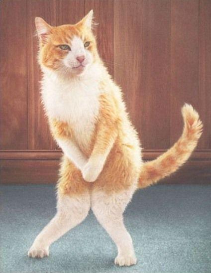 modesty_cat.jpg
