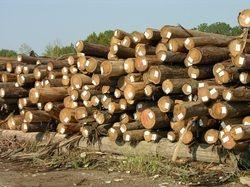 Cypress Logs2.jpg