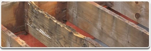 Joists after weather:moisture damage.jpg