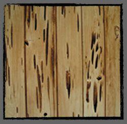 Pecky Cypress.jpg