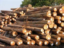 Cypress Logs3.jpg