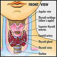 treating hypothyroidism naturally - blog