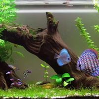 fish tank1.jpg
