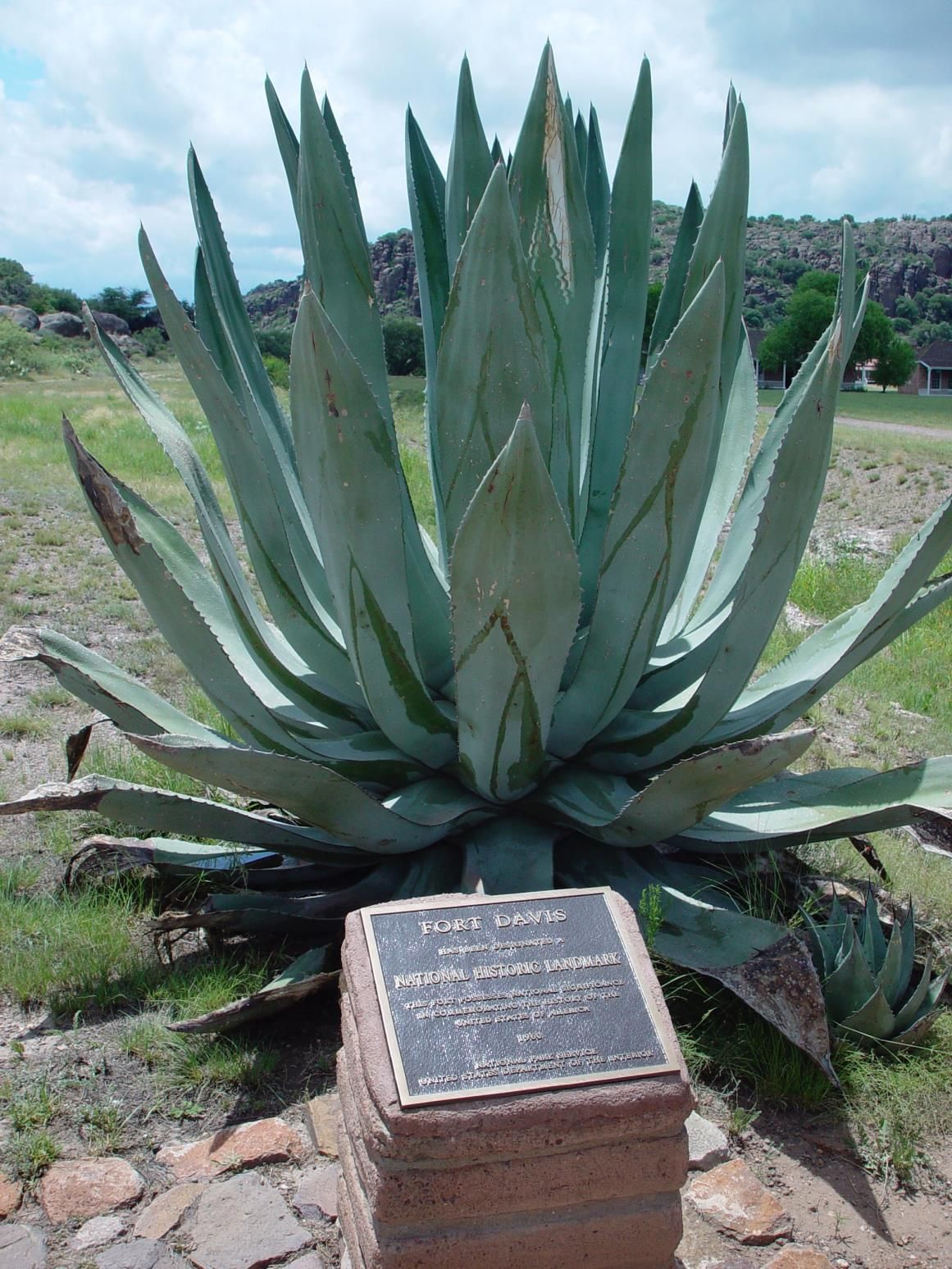 Agave at Fort Davis National Historic Site
