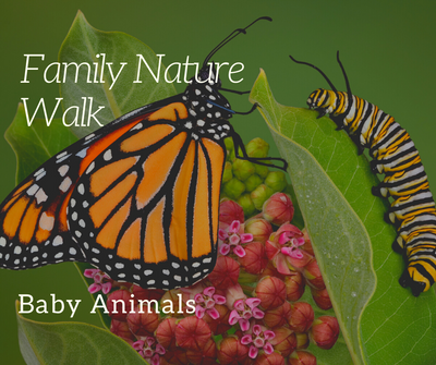 family nature walk Baby.png