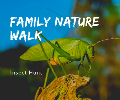 Family Nature Walk Insects.png