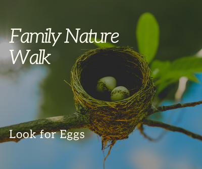 Family Nature Walk_ Eggs.png