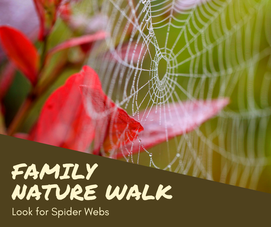Family Nature Walk Spider Webs.png