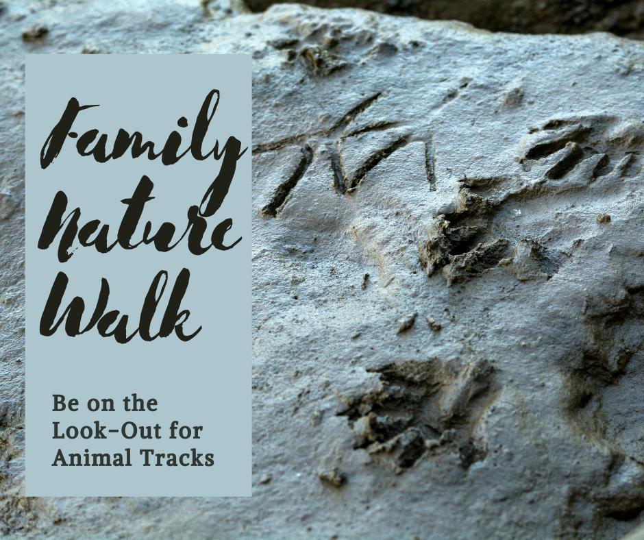Family Nature Walk Animal Tracks.png