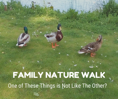 Family Nature Walk_ Out of Place.png