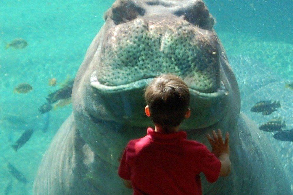 p-San-Antonio-Zoo-2010_54_990x660_201404231513.jpeg