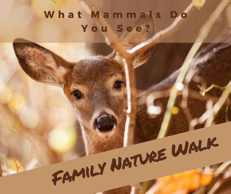 Family Nature Walk_ Mammals.png