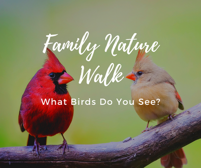 Family Nature Walk Birds.png