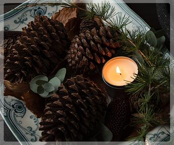 pine cone small.jpg