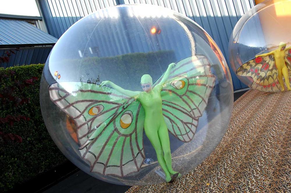 Bobbi Butterfly