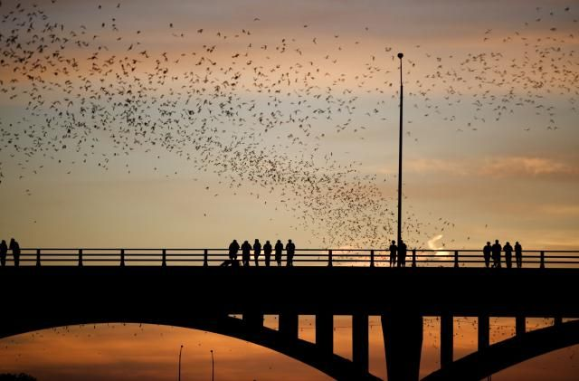 Bats Over Congress Bridge
