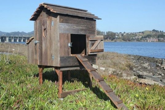 laughing-chicken-coop-537x358.jpg