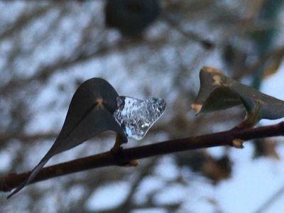 Valentine's Warmth.JPG