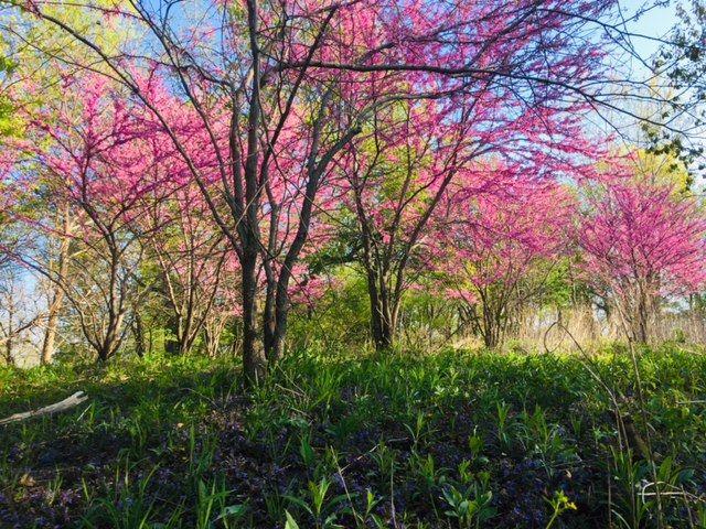 Impressionist Spring.jpg