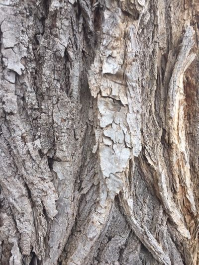 Augur in a Tree.JPG