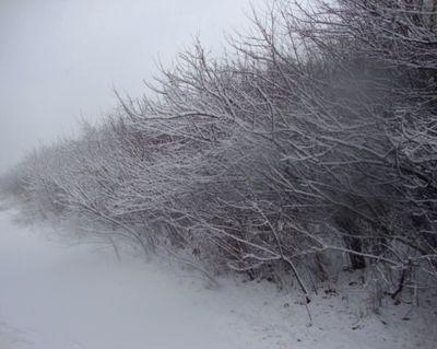Roots of Winter.JPG