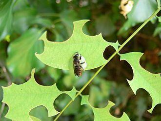 Bee Art.JPG