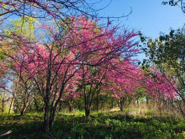 Spring Scribble.jpg
