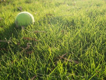 GreenGrassWithTennisBall-450x338.jpg