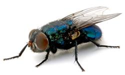 flies.png