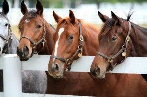 Florida-Horse-Farms-300x199.jpg