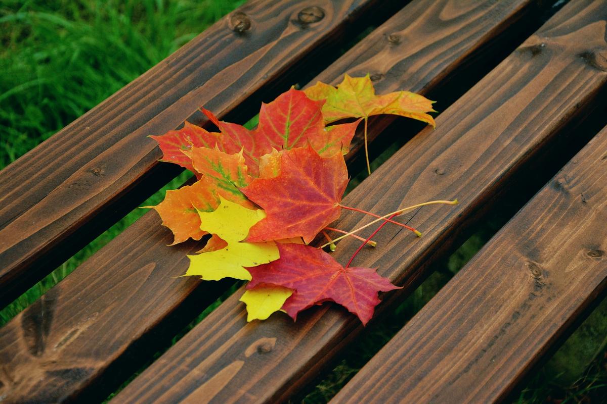 fall-foliage-1740841_1920.jpg
