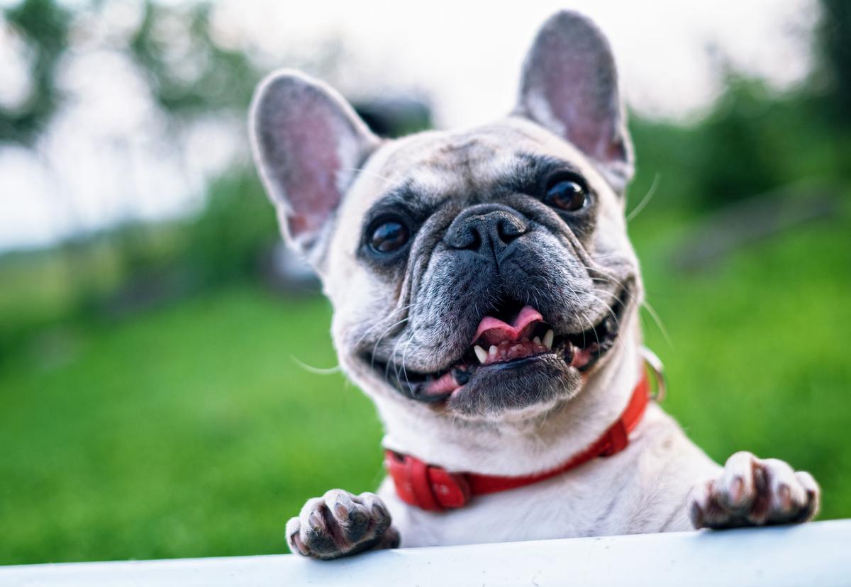 Best dog parks in Southwest Austin