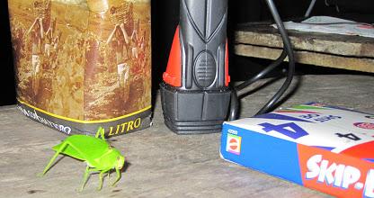 grasshopper on table in rainforest