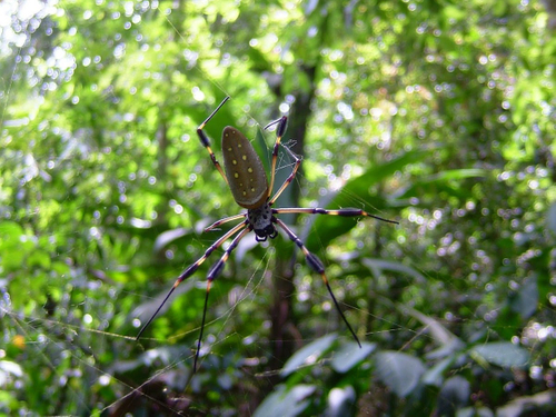 spider and web in rainforest