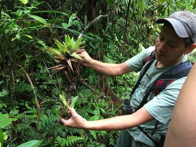 ecotourism expert in Costa Rican rainforest