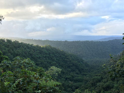 View of the rainforest from the lodge at la danta salvaje in costa rica