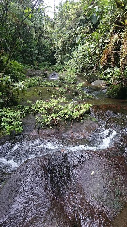 rainforest stream at la danta salvaje