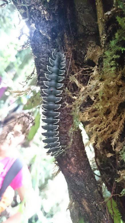 caterpillar on tree in rainforest
