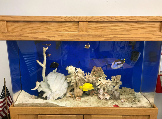 Grayling Fish Tank.jpg