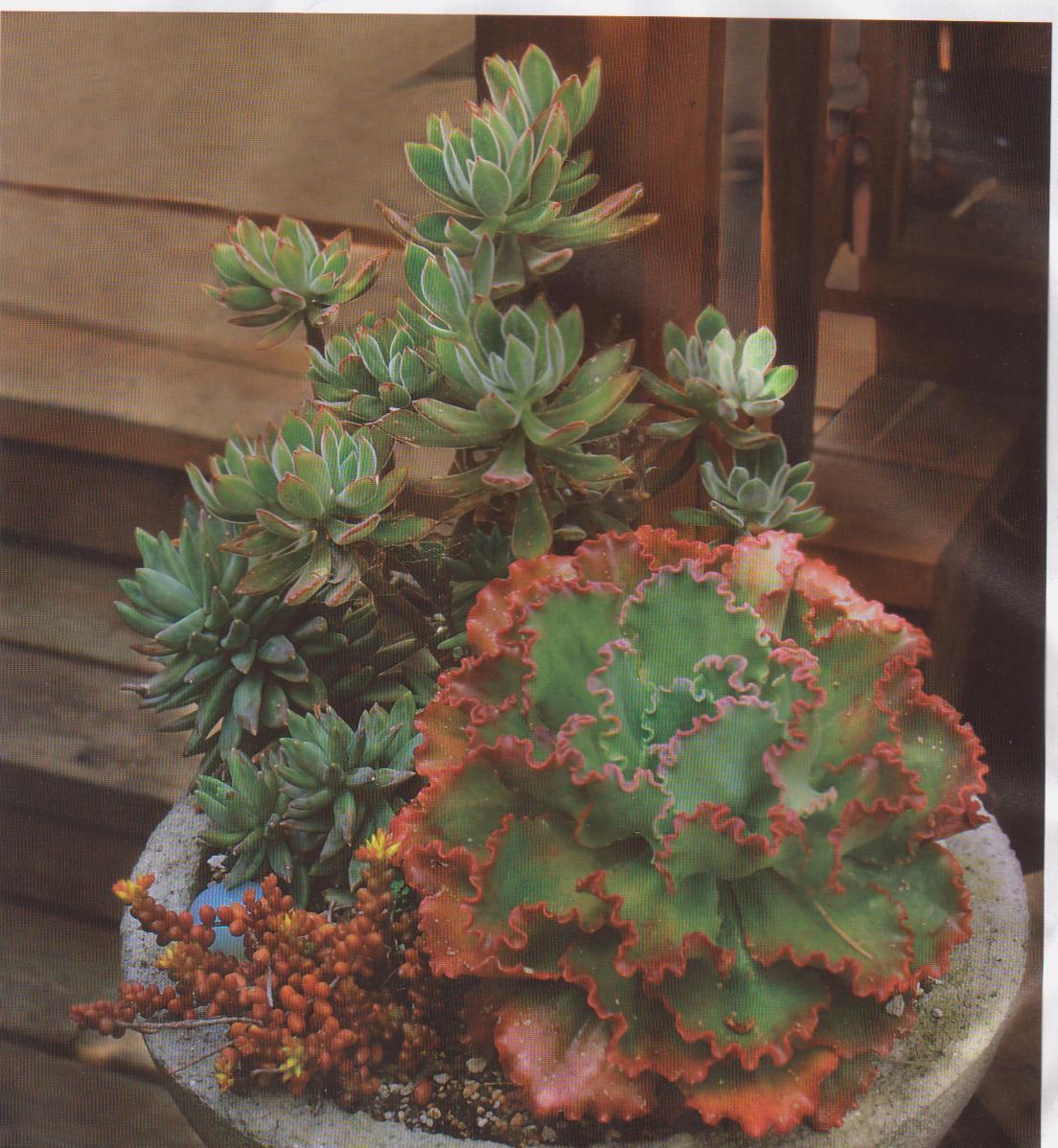 Succulents3 001.jpg